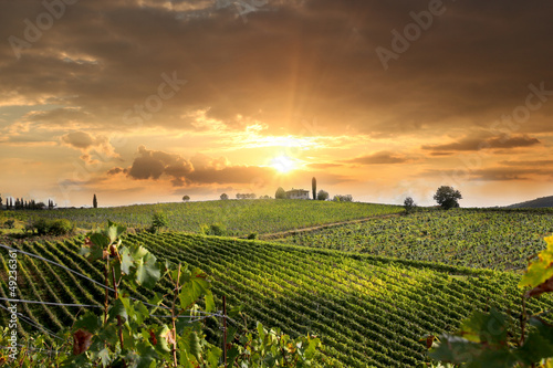 La pose en embrasure Vignoble Chianti vineyard landscape in Tuscany, Italy