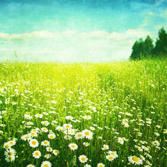 Obraz Grunge image of daisy field.