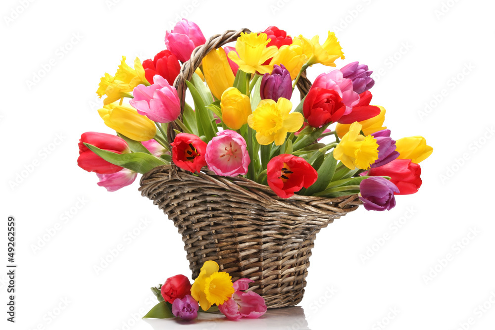 Fototapety, obrazy: Tulips and daffodils in basket