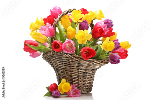 Fototapeta Tulips and daffodils in basket obraz
