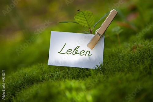 Fotografie, Obraz  Leben