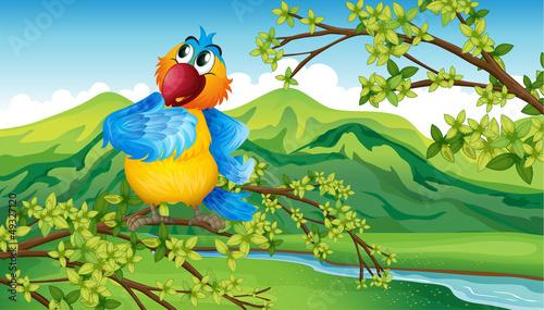 Poster de jardin Zoo A parrot near the riverbank