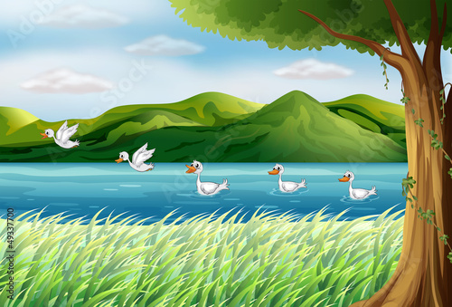 Ingelijste posters Rivier, meer Five ducks in the river