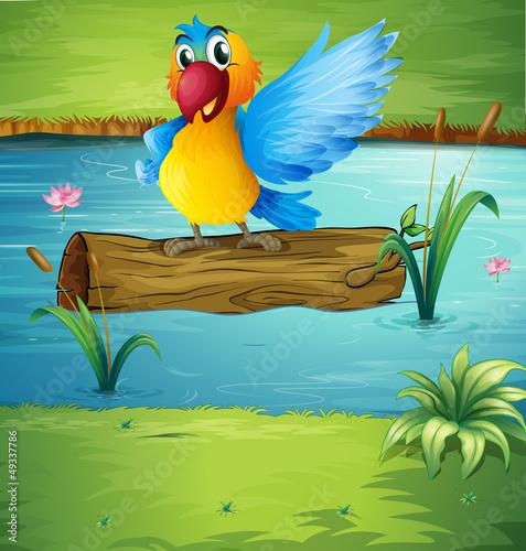 Aluminium Prints River, lake A parrot above a trunk