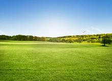 Alnwick Pastures, Northumberland