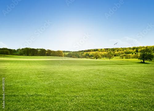 Montage in der Fensternische Gras Alnwick Pastures, Northumberland