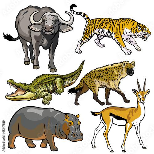 zestaw-z-dzikimi-afrykanskimi-zwierzetami