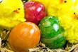 Leinwandbild Motiv Osternest mit gefärbten Eiern und Küken