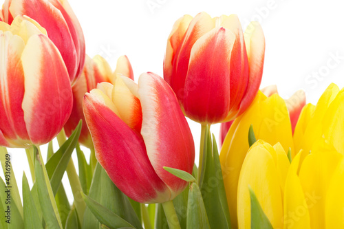 Fototapety, obrazy: Bunch of tulips