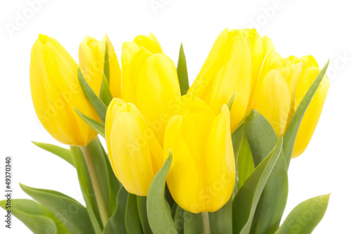 Bunch of tulips - 49370340
