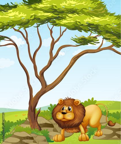 Printed kitchen splashbacks Cats A lion near a big tree in the hills