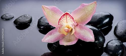 zen-stones-i-orchid-flower-masaz-kamieniami