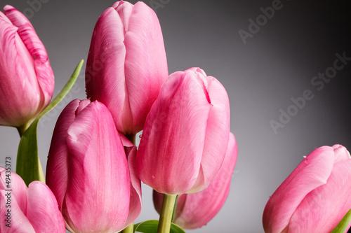 rozowe-tulipany-z-kroplami-rosy