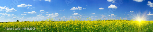 Poster Panoramafoto s Rapefield and cloudscape with sunbeams