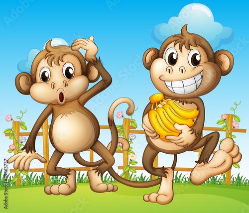 Obraz Dwie małpy z bananem wewnątrz ogrodzenia - fototapety do salonu