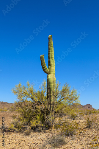 Papiers peints Cactus beautiful cacti in landscape