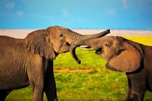 Elephants Playing On Savanna. ...