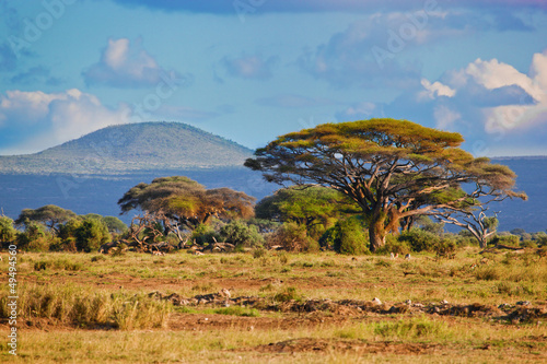 Photo Stands South Africa Savanna landscape in Africa, Amboseli, Kenya