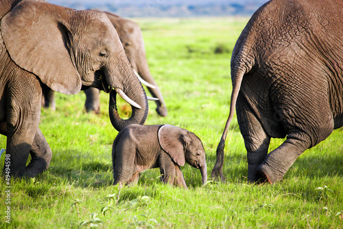 Photo  Elephants family on savanna. Safari in Amboseli, Kenya, Africa