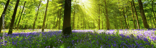 Foto op Plexiglas Pistache Panoramic Bluebell Wood