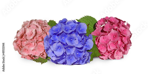 La pose en embrasure Hortensia hortensias de 3 couleurs