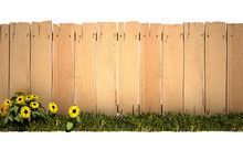 Garden And Wooden Fence