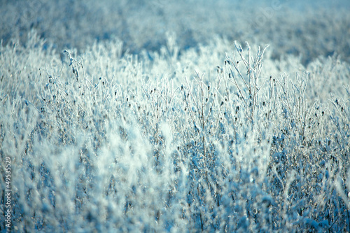 Hoarfrost on branches of bushes