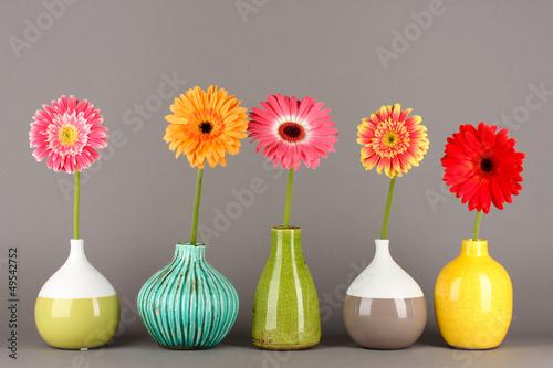 Fototapety, obrazy: Beautiful Gerber flowers on grey background