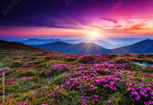 flower - 49545683