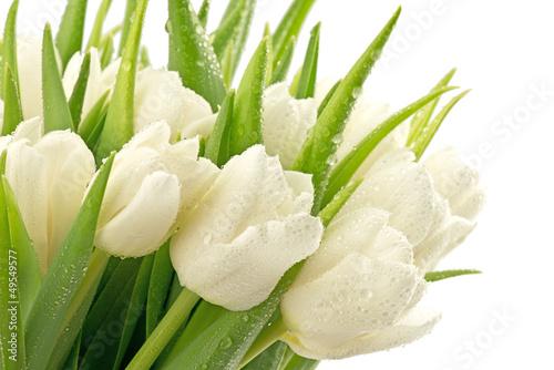 Foto op Plexiglas Tulp Tulipany
