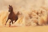 Koń arabski ucieka z Pustynnej Burzy - 49555108