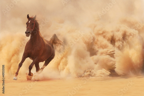 Foto op Plexiglas Zandwoestijn Arabian horse running out of the Desert Storm