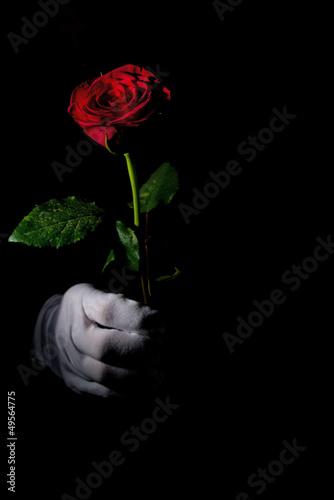 Keuken foto achterwand Rood, zwart, wit white glove, red rose