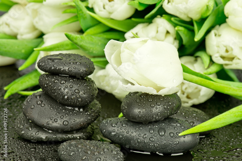 Fototapeta Tulipan i czarne kamienie