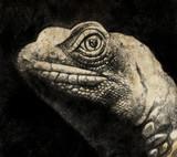 Szkic wykonany za pomocą cyfrowego tabletu z głową jaszczurki w sepii - 49581393
