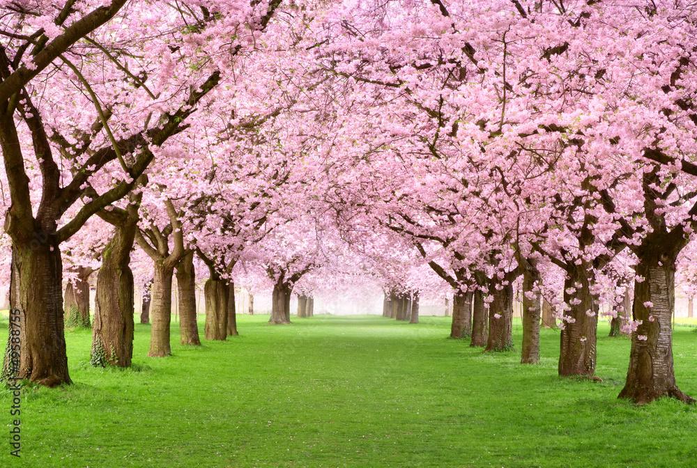 Fototapety, obrazy: Gartenanlage in voller Blütenpracht