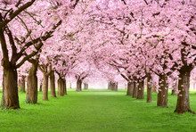 Gartenanlage In Voller Blüten...