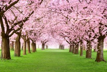 Obraz na Plexi Drzewa Gartenanlage in voller Blütenpracht