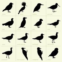 Set Of Birds (part 2)