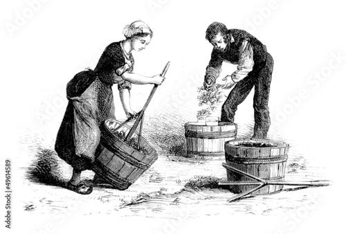 Fotografía  Destemming Grapes - Egrapper le Raisin - 19th century