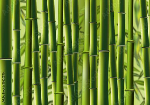 Bambus - bamboo