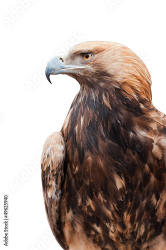 Poster Aigle Proud Caucasian eagle
