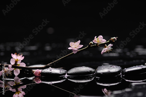 Tuinposter Spa Flowering branch of the cherry-tree with zen stones