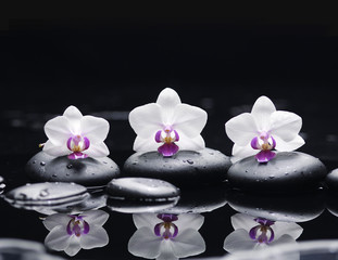 Obraz na Plexiorchid flower and stones in water drops