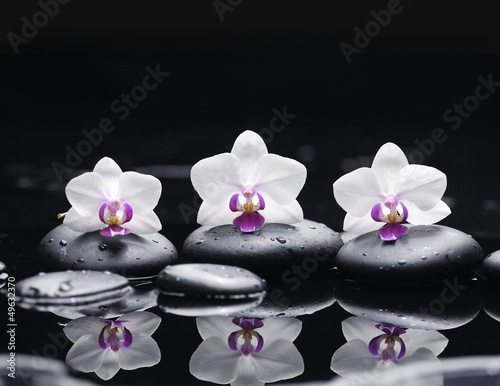 Poster Spa orchid flower and stones in water drops