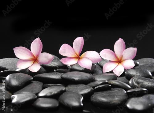Aluminium Prints Spa Still life with three frangipani and black pebbles