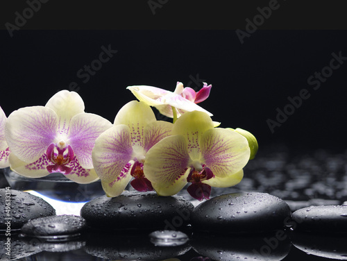 Poster Spa Spa still life with branch orchid and black stones