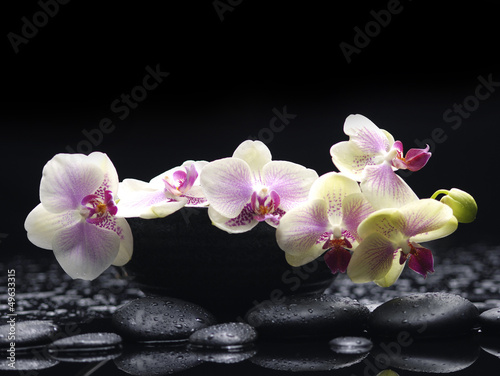 Poster Spa Branch white orchid in bowl with therapy stones