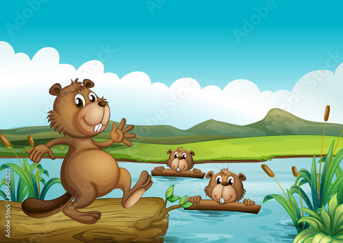Canvas Prints River, lake Beavers playing in the river with woods