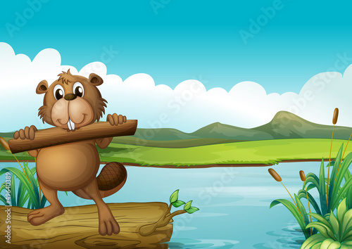 Canvas Prints River, lake A beaver above a floating trunk holding a piece of wood